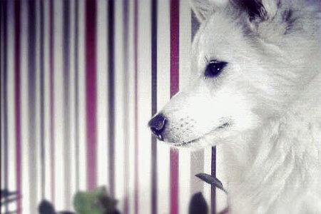 Hunde erlaubt, Bild: AMBER HOTEL BAVARIA Bad Reichenhall